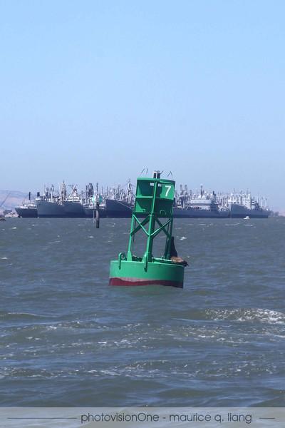 Sea lion checks out the Mothball fleet.