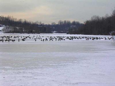 Nature in Winter: Jan - Mar 2004