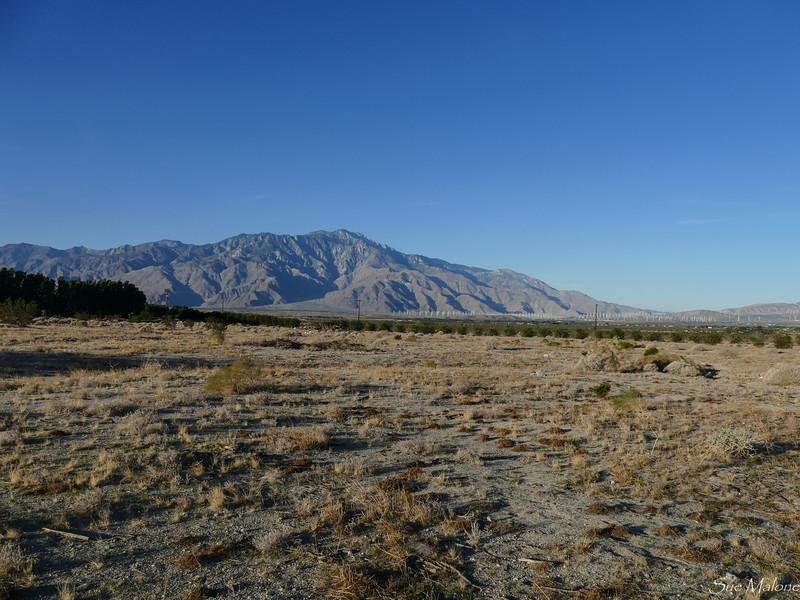dog walk in the desert (4 of 13).jpg