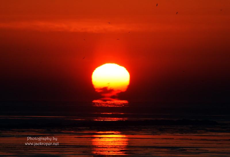 01 Sunrise-close up -Roper jpg.jpg