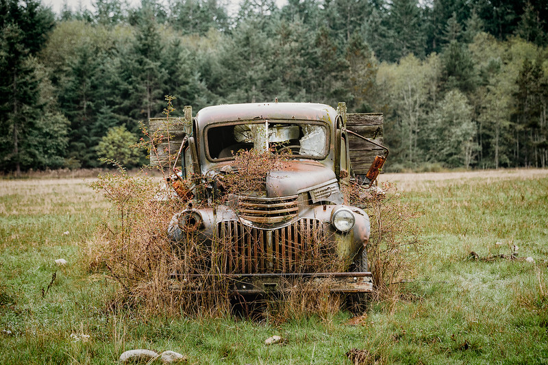 Out to Pasture II