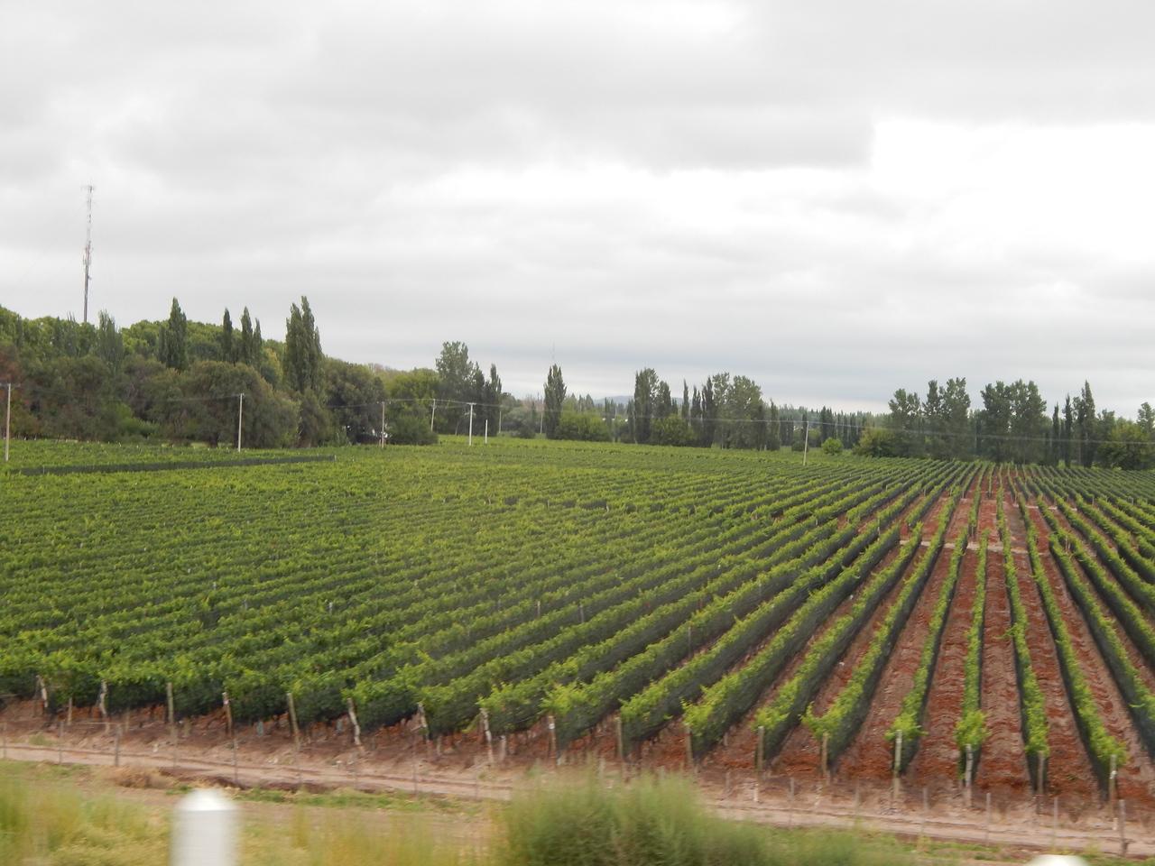 Vineyards are everywhere.