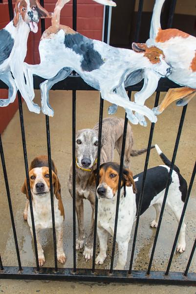 DRHC Closing Meet 2014-2015 Kennels