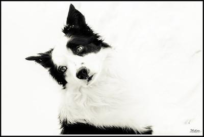 Snow, dresses and dog