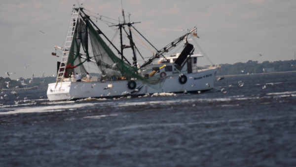 Shrimp Boat Video