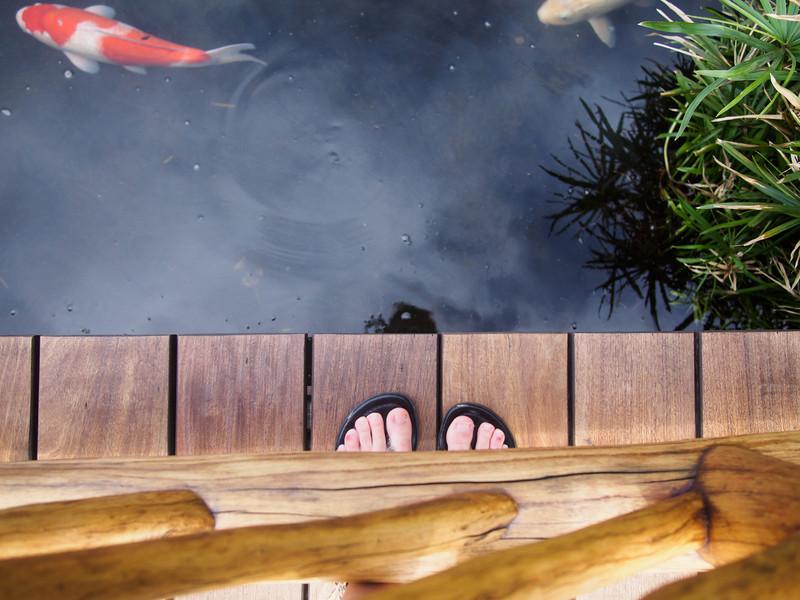 Feet and Fish, Hawaii