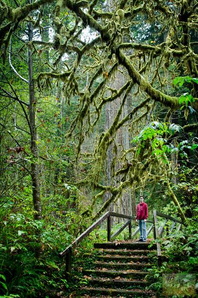 20141015_Redwoods_0038.jpg