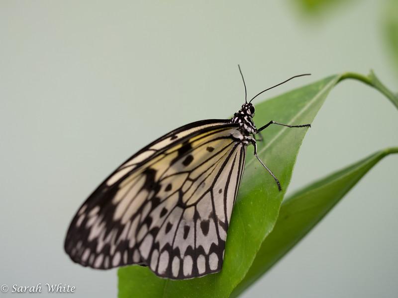 140503_ButterflyHouse_309.jpg