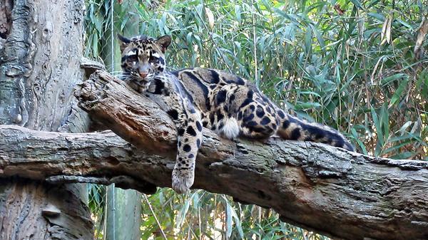 Nashville Zoo - November 2016