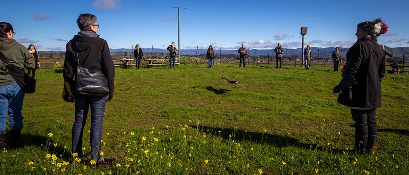 Bouchaine Winery Falconry Vineyard Tour