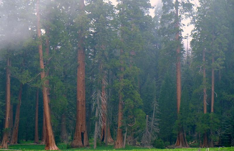 California Day 6 Sequoia 05-30-2017 95.JPG