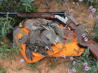 quail-gone-wild