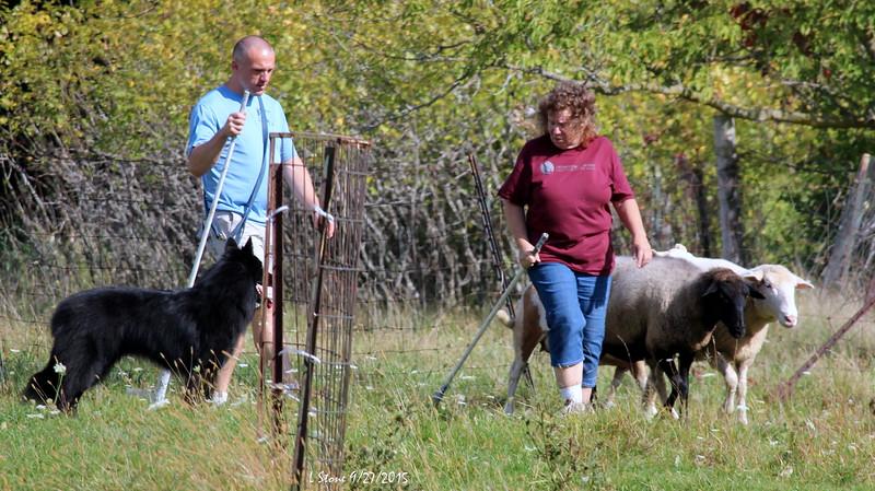 2015.9.27 Herding at Bonnies (60).JPG