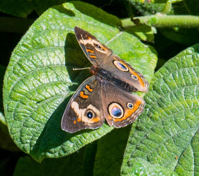 Butterflies-3.jpg