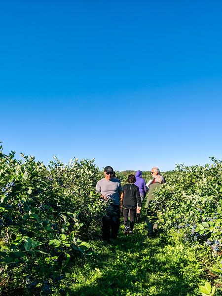 Blueberry Acres.jpg