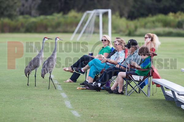 Doral Falcons @ CCA Ducks Varsity Football - 2014
