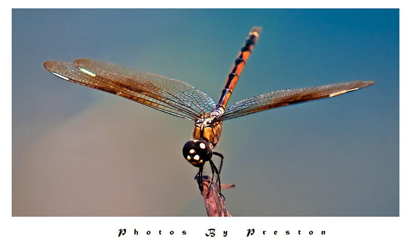 Dragonflyquicksnack-copy.jpg