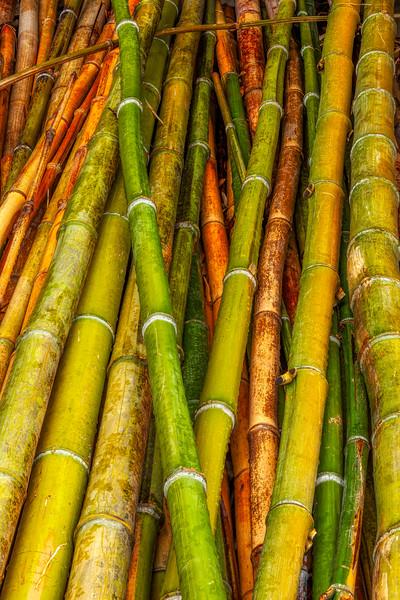 Bamboo 9, Hakone Garden, Saratoga, California, 2010