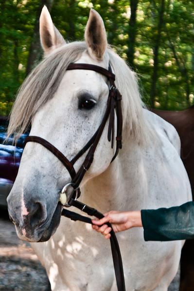 Wallis Cove Horse Shoot