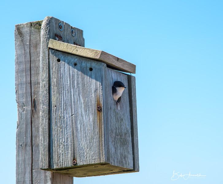 Block Island-22.jpg