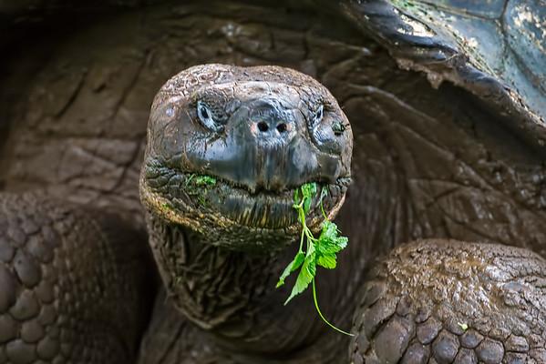 Galapagos, Ecuador 2016