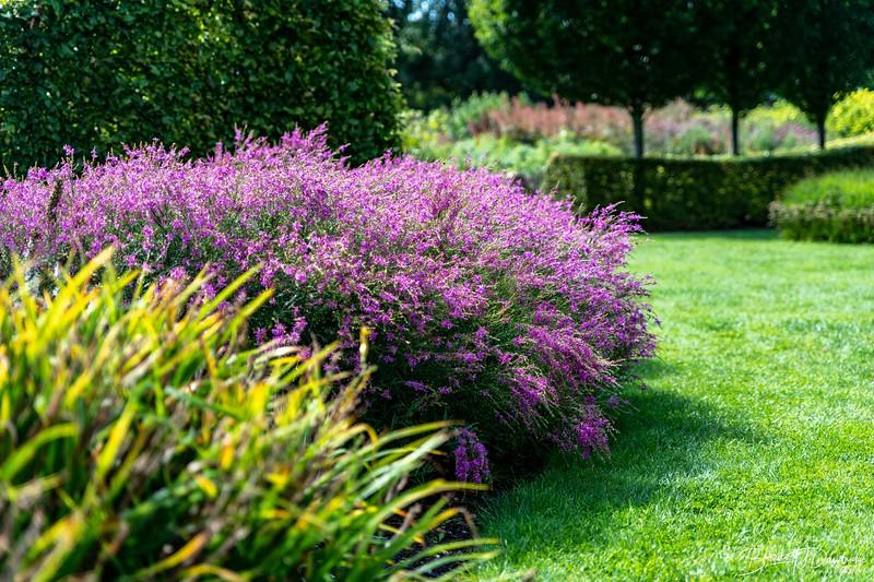 850_Sussex Prairie Gardens-8502643.jpg