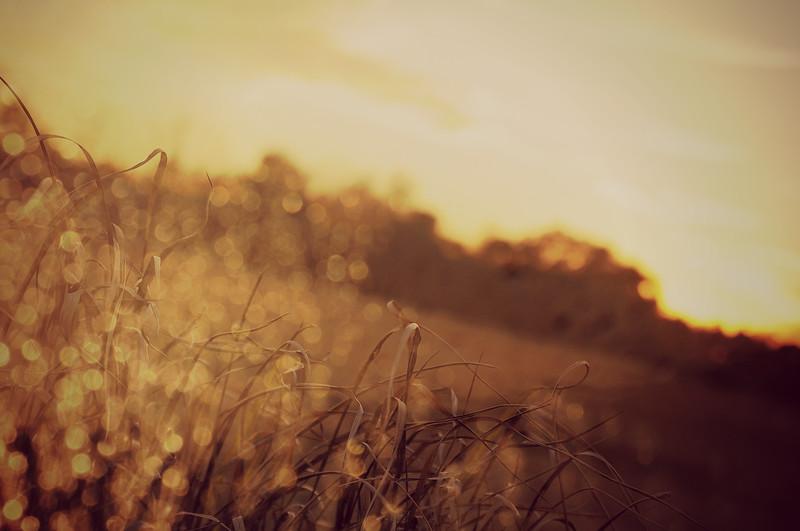 LTD_2012-12-20_0029_3