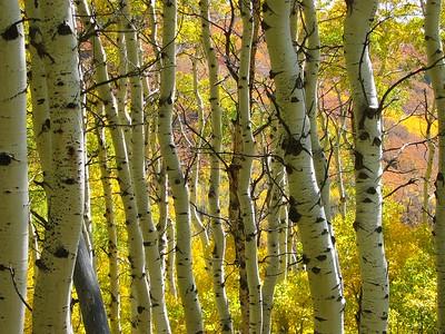 Telluride Trail Running + Wellness Retreat 2020