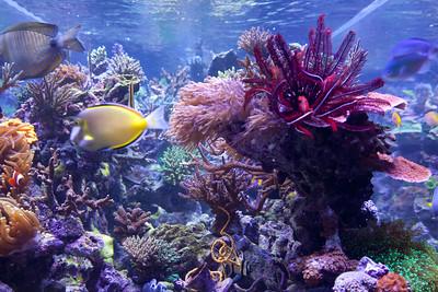 coral progress
