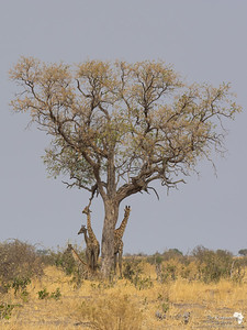 Giraffe Shade