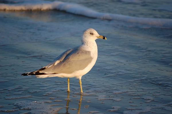 Hilton Head - Nature and Wildlife