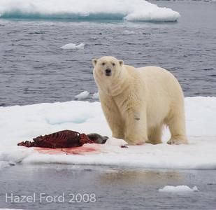 Svalbard June 2008