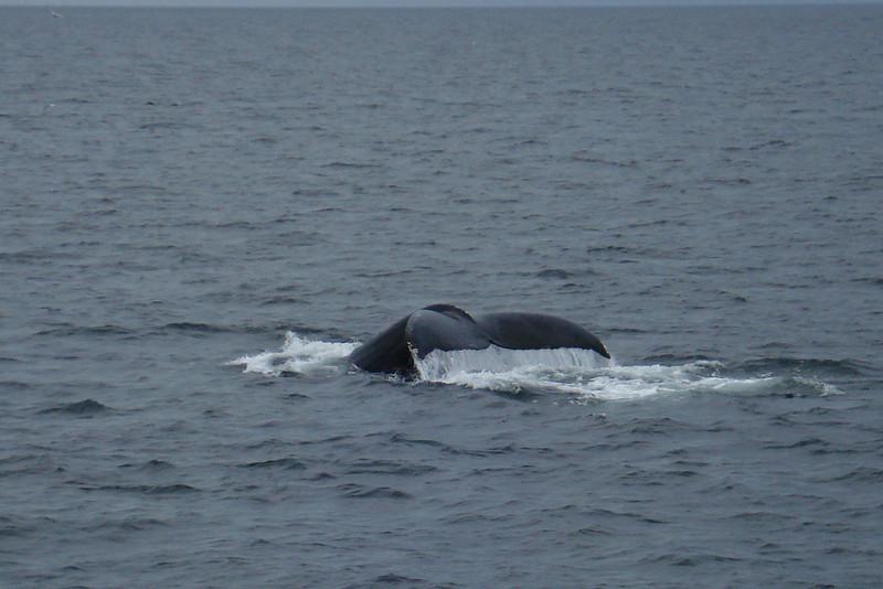 Whale's Tail.jpg