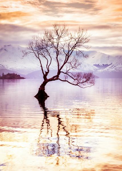 tree-wanaka-1.jpg