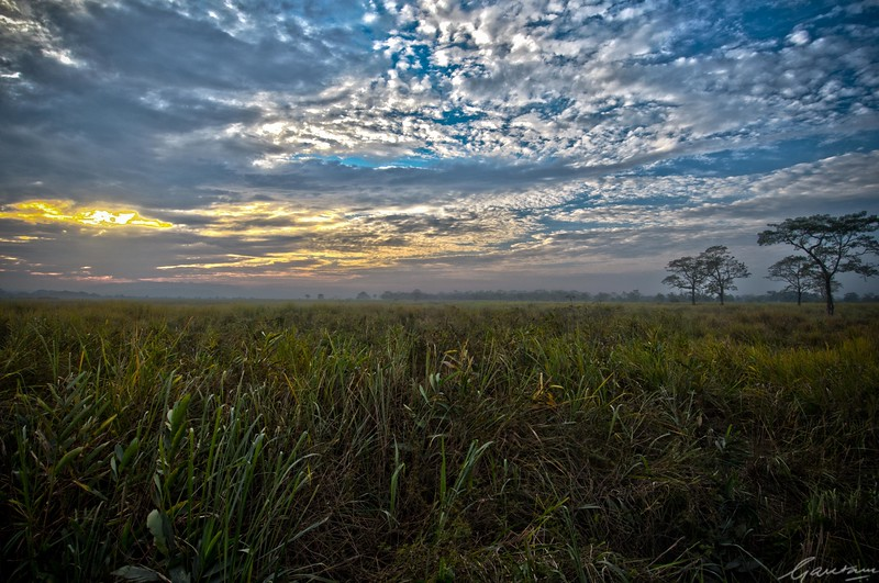 34: Kaziranga Forests HDR Experiment 24 December 2011