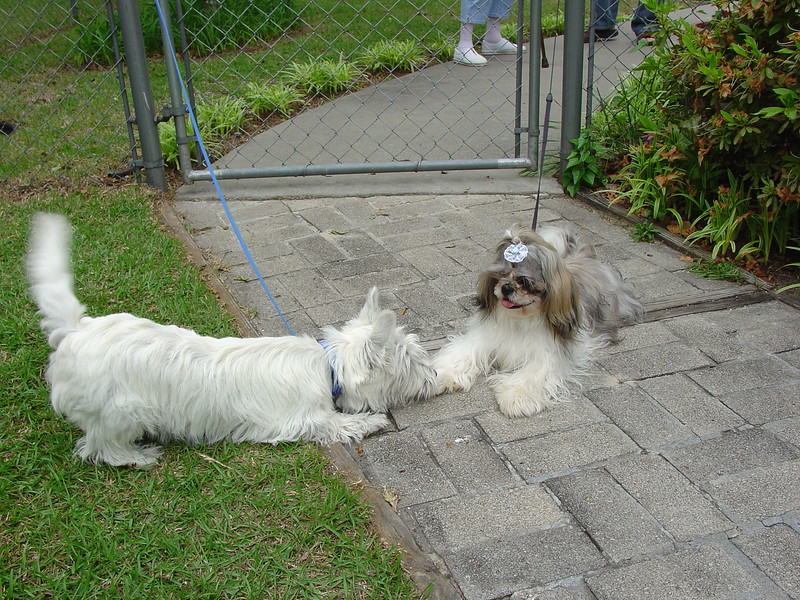 Gypsy and Maggie 2.JPG