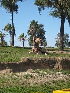 Busch Gardens Nov 2010