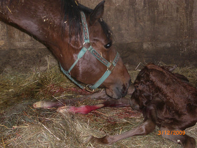 All In Elegances foal from Native Dreamer