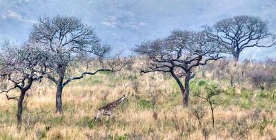 Lions, Zebras, Giraffes, Rhinos, Monkeys