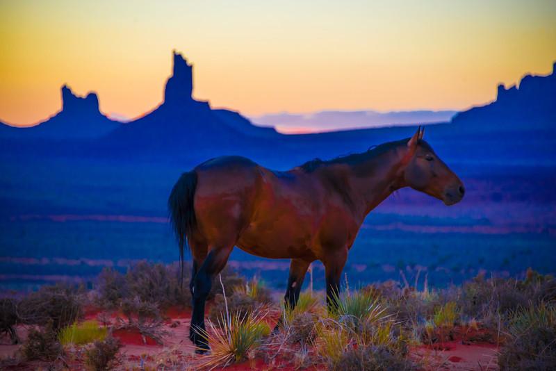 Monument Horse.jpg
