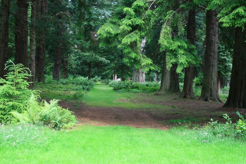 Bute Forest.jpg