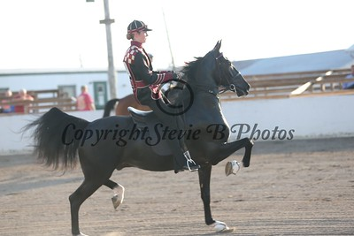 6. Road Horse Under Saddle