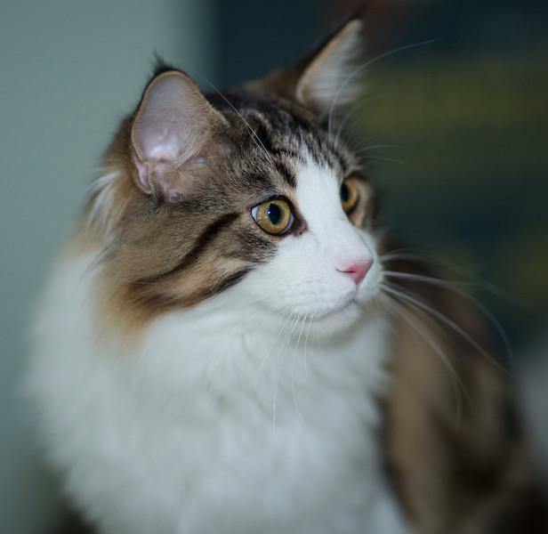 Kittens265.jpg