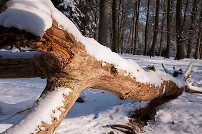 Estate De Utrecht winter 2012