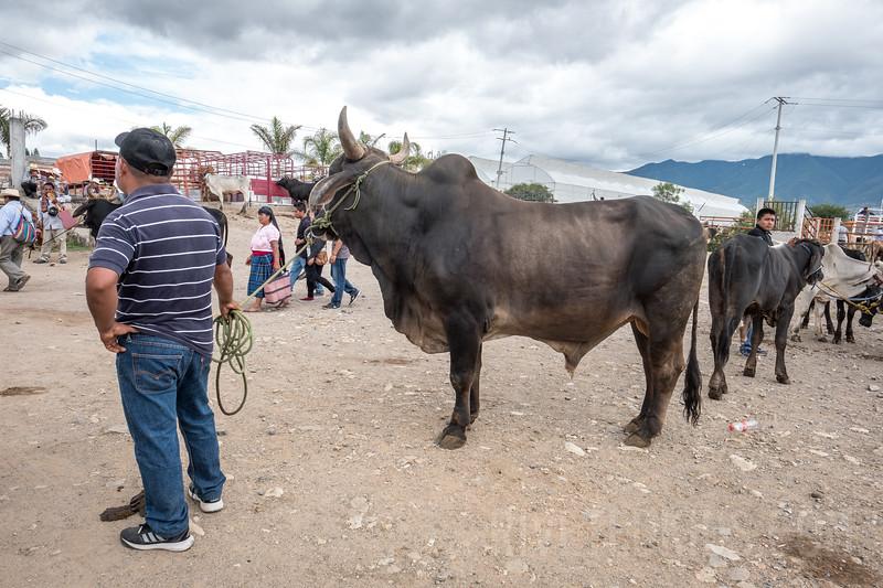 Riveted Kids Camp 2018 - Coding in Oaxaca (029).jpg