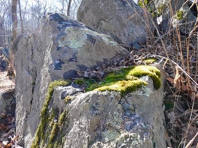 Potomac-BillyGoat-022519