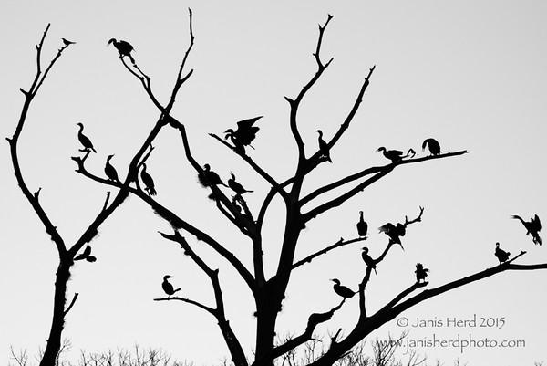 Birds-B&W