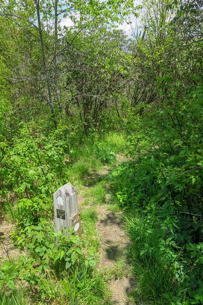 Mountains-to-Sea/Graveyard Ridge Trail West Junction -- 5,380'