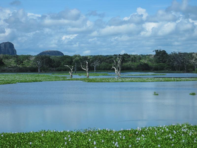 Sri_Lanka17-9834.jpg