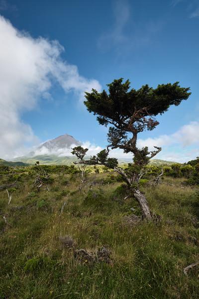 Azores - Pico